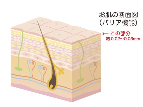 お肌の断面図(バリア機能)