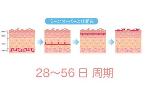 お肌のターンオーバー周期